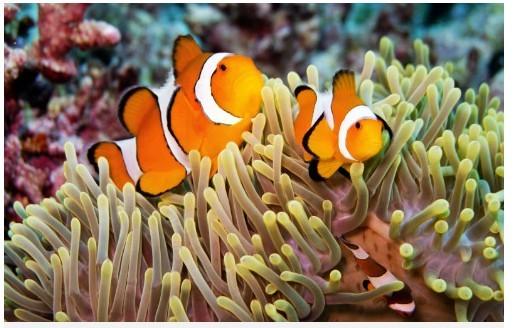 泰国涛岛 疯狂潜水探险升级